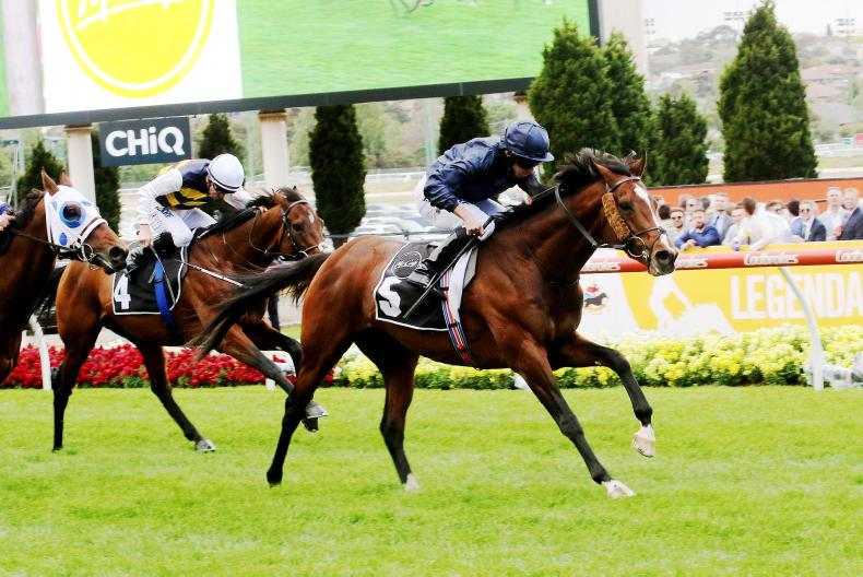 AUSTRALIA: Hunting Horn shines with Camelot brilliance