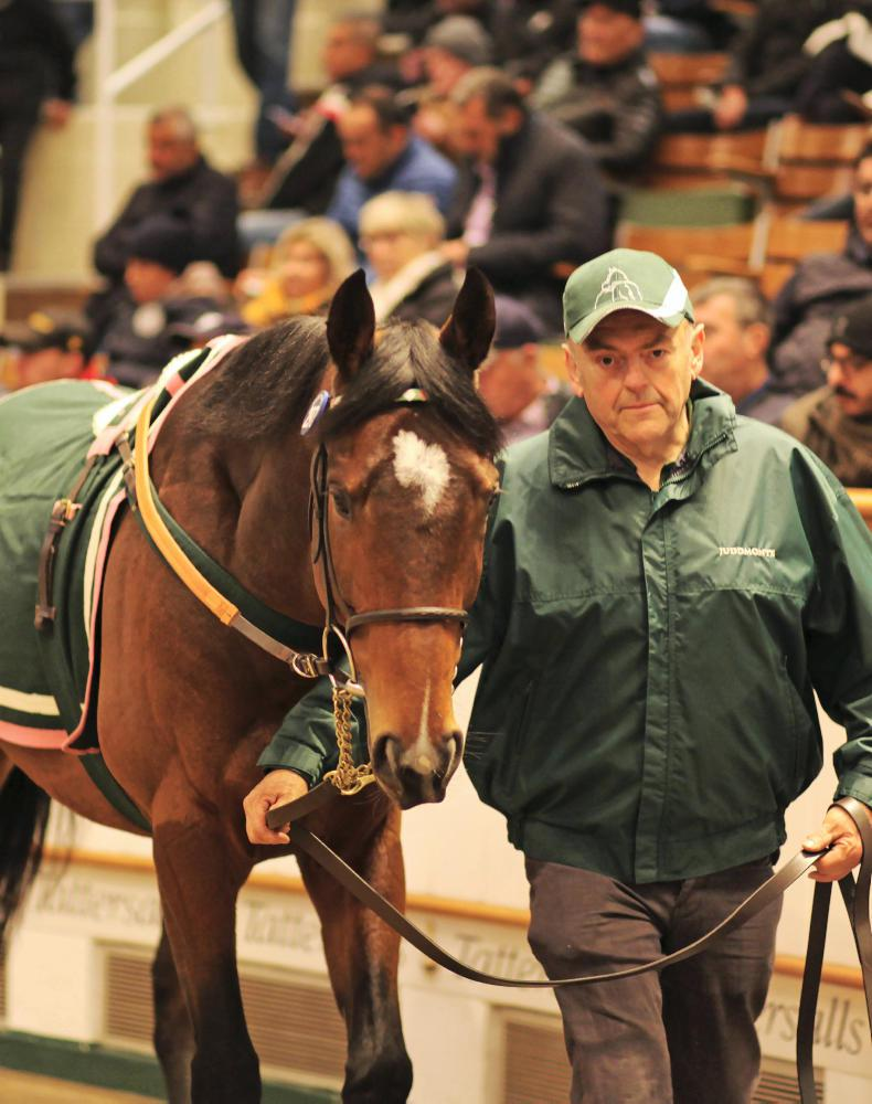 TATTERSALLS AUTUMN HIT SALE: Appetites strong for Juddmonte's offerings