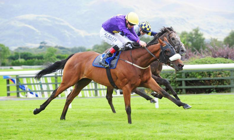 NAAS SUNDAY PREVIEW: Dalton can deliver deserved win