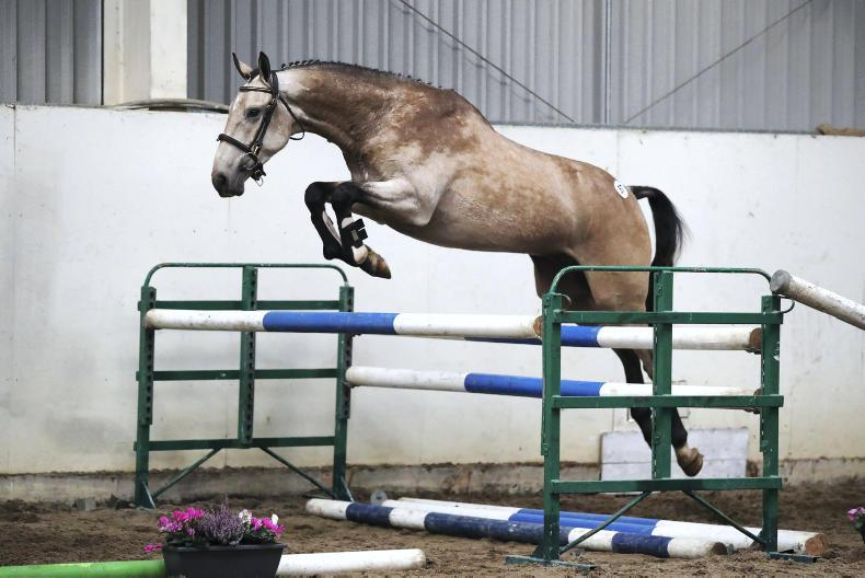 GO FOR GOLD PREVIEW: Eye-catching duns likely to attract attention