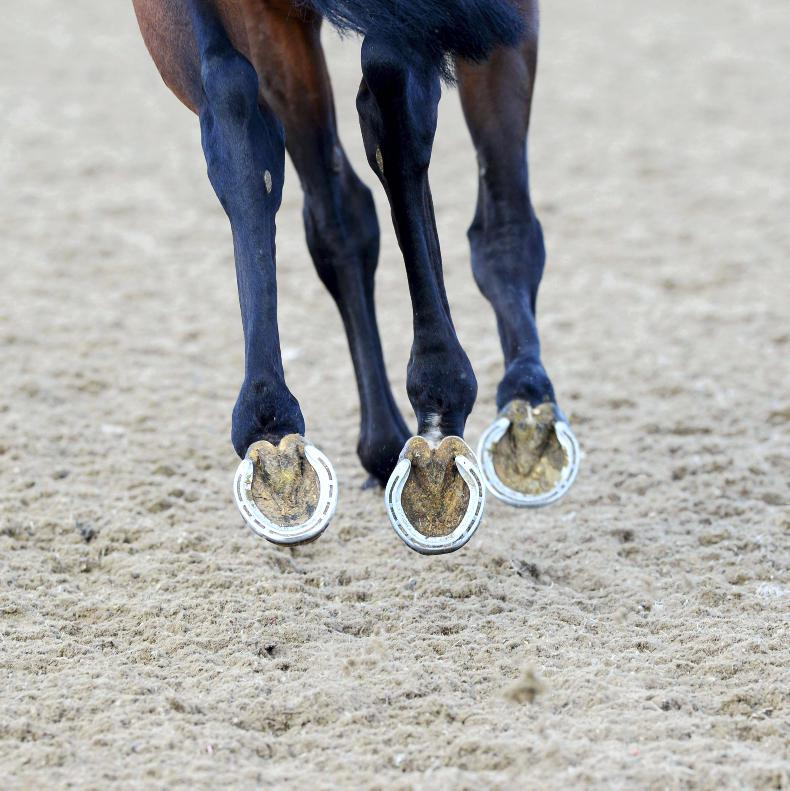 Possible lung cancer risk to equestrians exposed