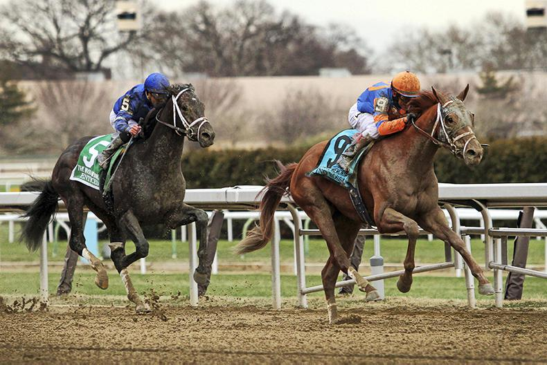 BREEDERS' CUP: Rosso rules for Pletcher in Classic