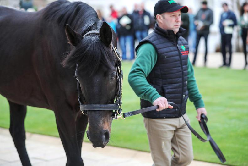 NEWS: Stallion Trail confirmed for January