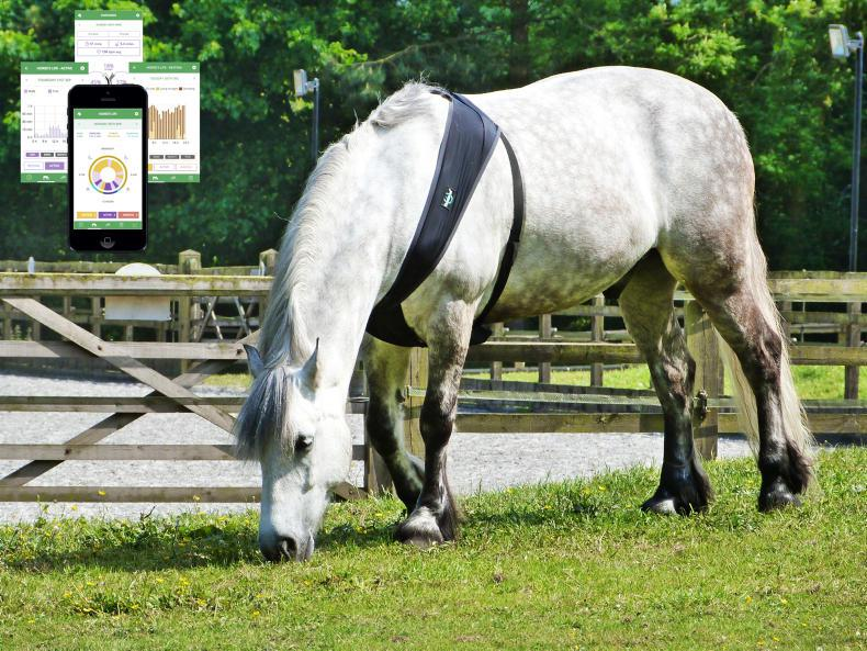 HORSE SENSE: Is your horse getting enough sleep?