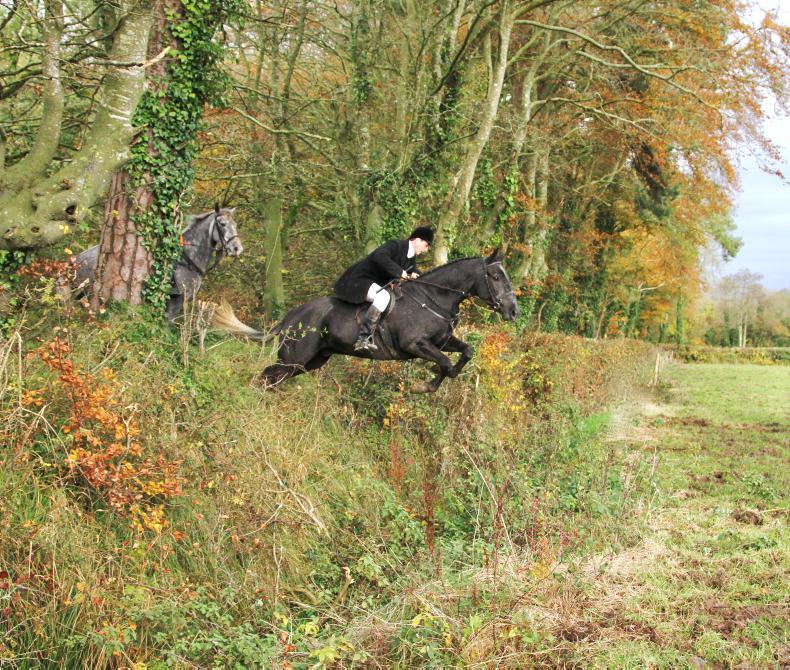 IRISH HORSE WORLD FIXTURES, NOVEMBER 16th 2019