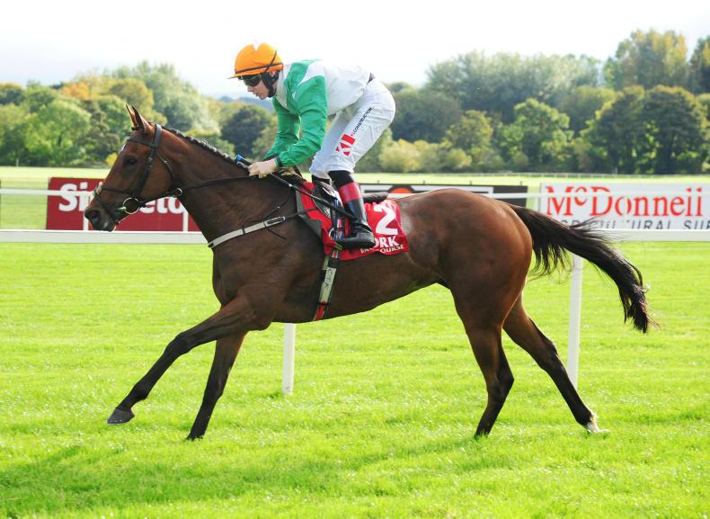 BREEDING INSIGHTS: And the Oscar goes to Willie Mullins