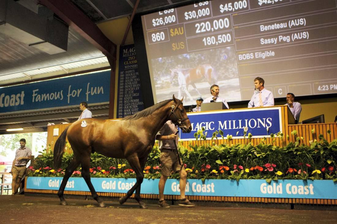 Magic Millions: Spending breaks A$100 million at Australian yearling sale