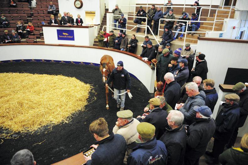 TATTERSALLS IRELAND NH SALE: Flemensfirth fillies in high demand