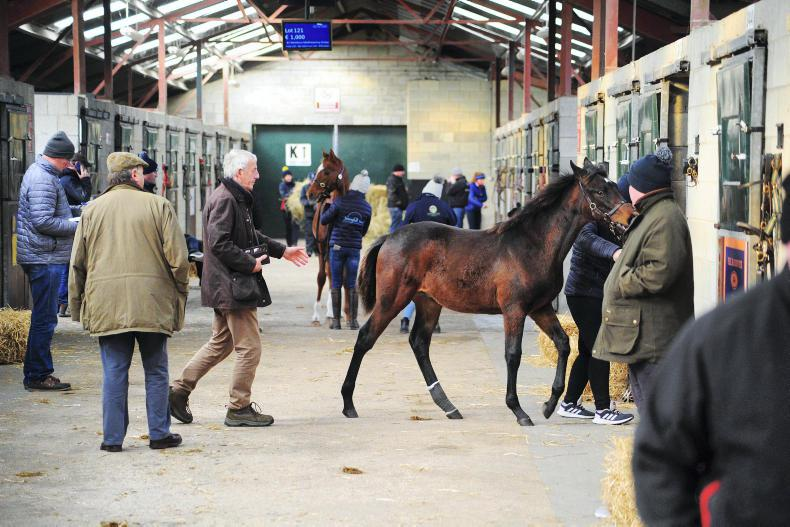 TATTERSALLS IRELAND NH SALE: Activity reminiscent of the pre-recession era