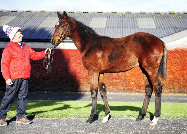 TATTERSALLS IRELAND NH SALE: Camelot foal steals the show