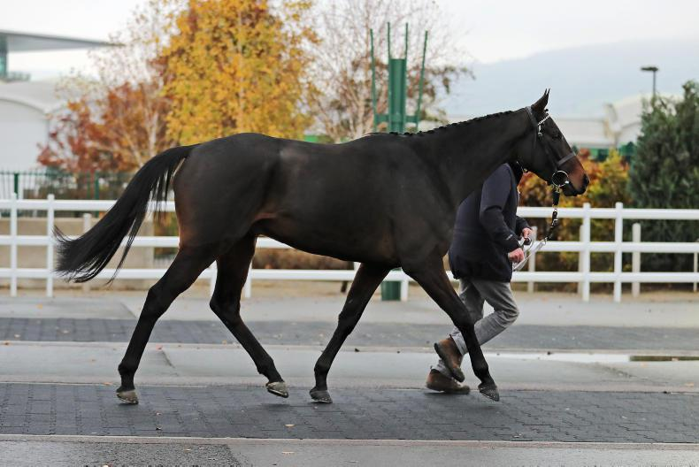 TATTERSALLS CHELTENHAM NOVEMBER SALE: Ballyadam stars among Irish pointers