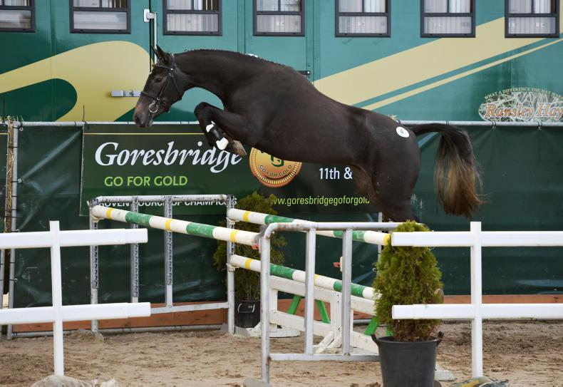 GO FOR GOLD SALE: Townend signs for €41,000 top lot