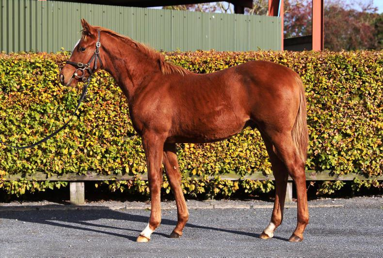 SALES: Godolphin buys Ghaiyyath's full-brother for €1,200,000