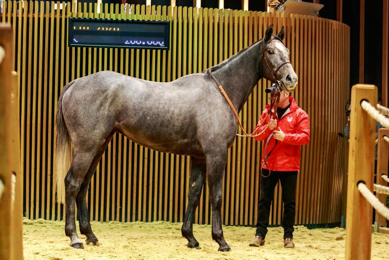 ARQANA AUTUMN SALE: Records smashed as Master Dino holds sway