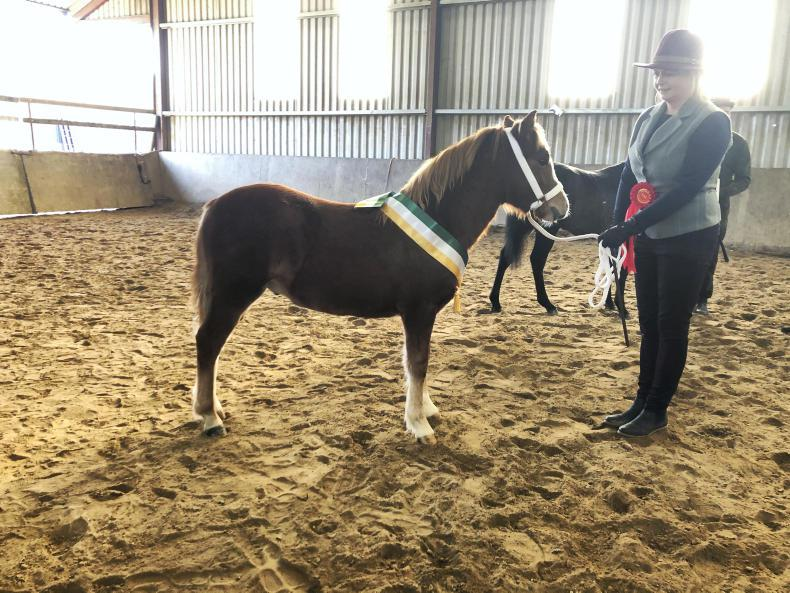 AROUND THE COUNTRY:  Top titles for quality ponies