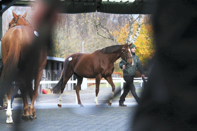 SALES: Snowflakes tops strong opening session of the Goffs Breeding Stock Sale