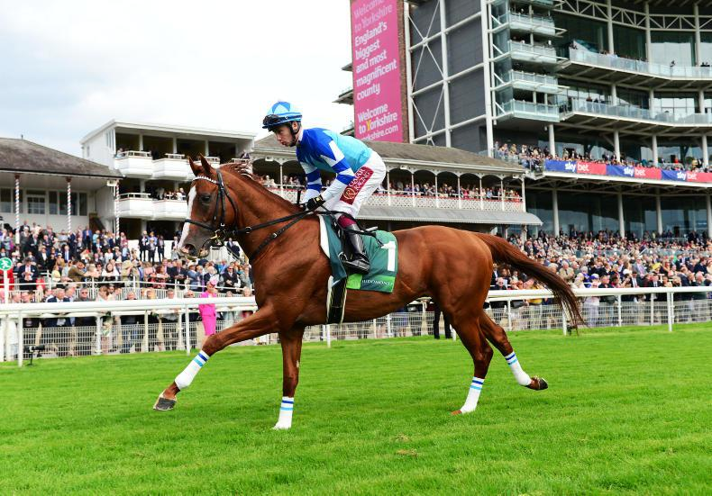 JAPAN CUP PREVIEW: Buick hoping for a Rey day