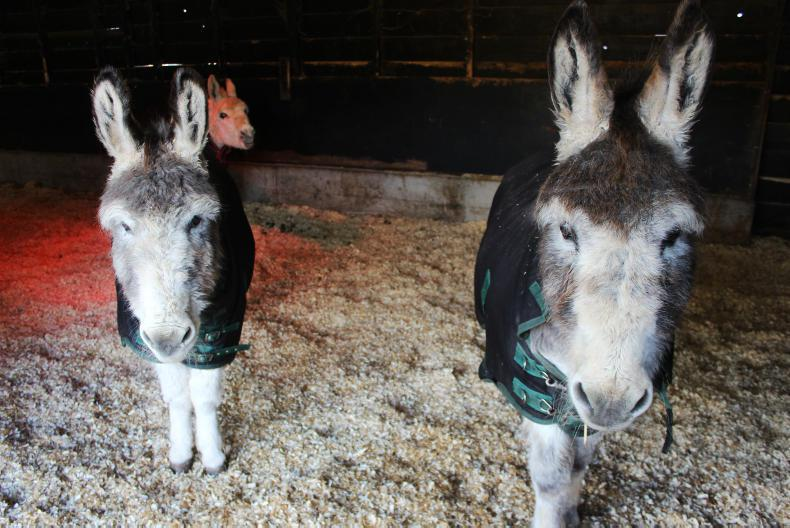 CHRISTMAS GIFT GUIDE 2019: Support The Donkey Sanctuary this Christmas