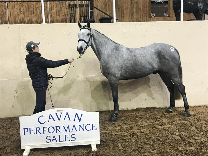 CAVAN SALES: Cobra gelding tops sale at €11,500
