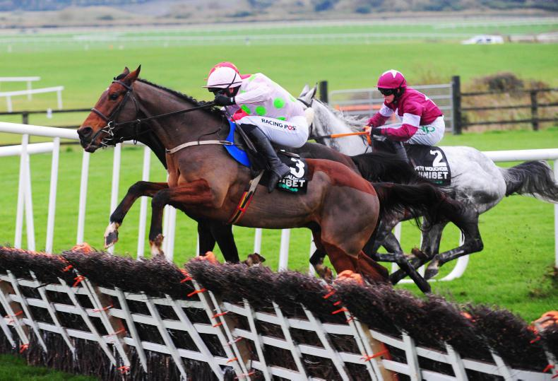 BREEDING INSIGHTS: Soldier's son is a potential Champion