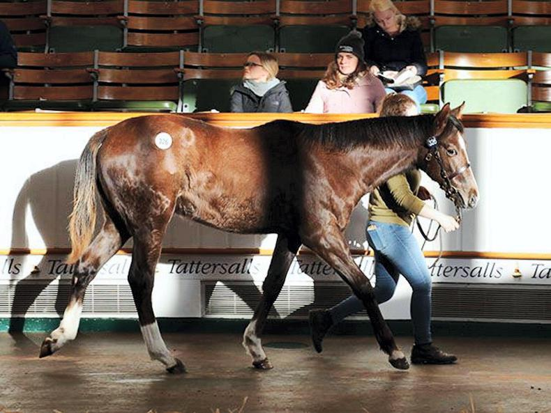 SALES: Solid start to Tattersalls December Foal Sale
