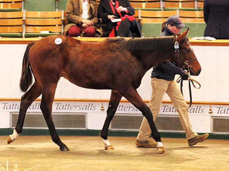 SALES: First-crop sires among the most popular during strong trade in Newmarket
