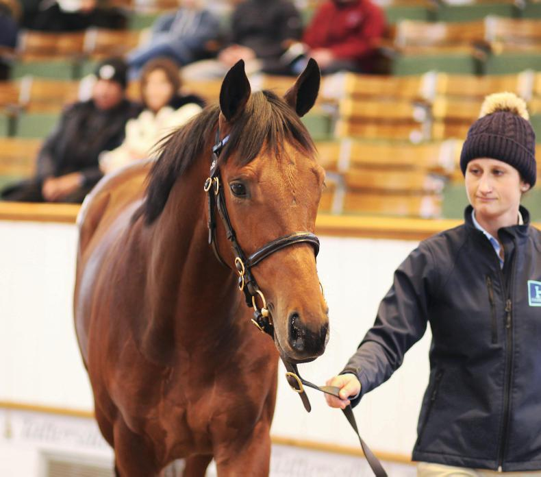 TATTERSALLS DECEMBER YEARLING SALE: Dubawi puts Hazelwood on top again