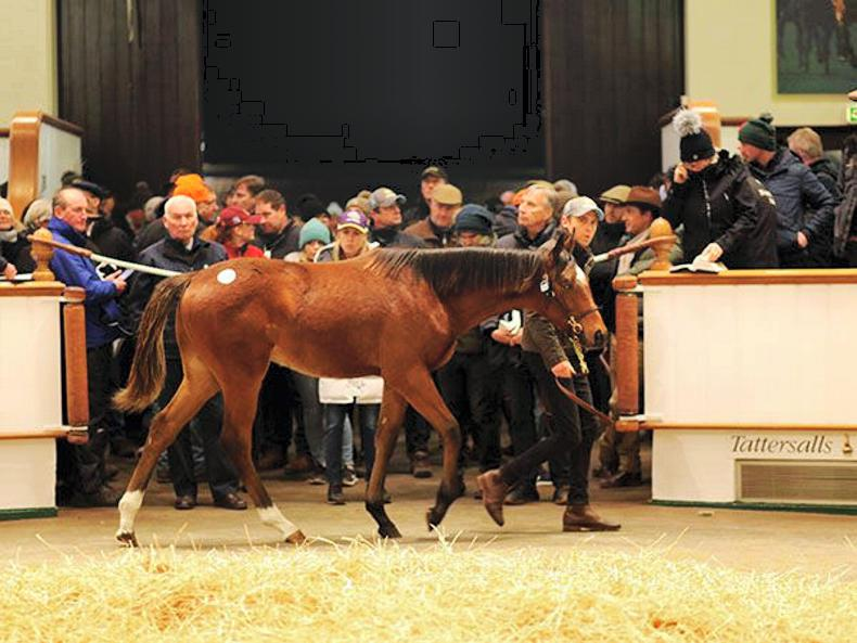 SALES: Son of Frankel and Simple Verse tops foal sale at 600,000 guineas
