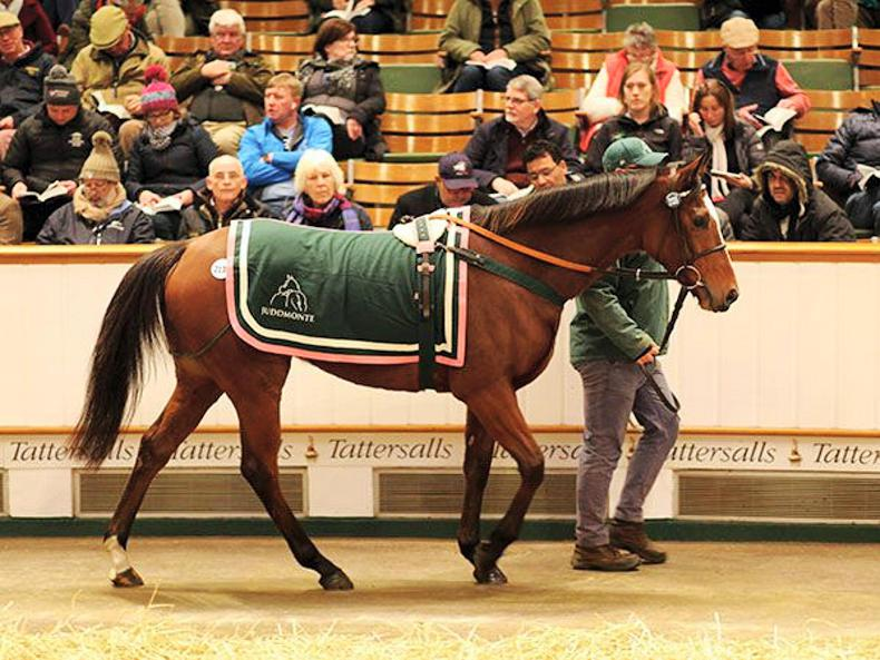 SALES: 750,000gns Frankel filly stars amid dominant Juddmonte draft