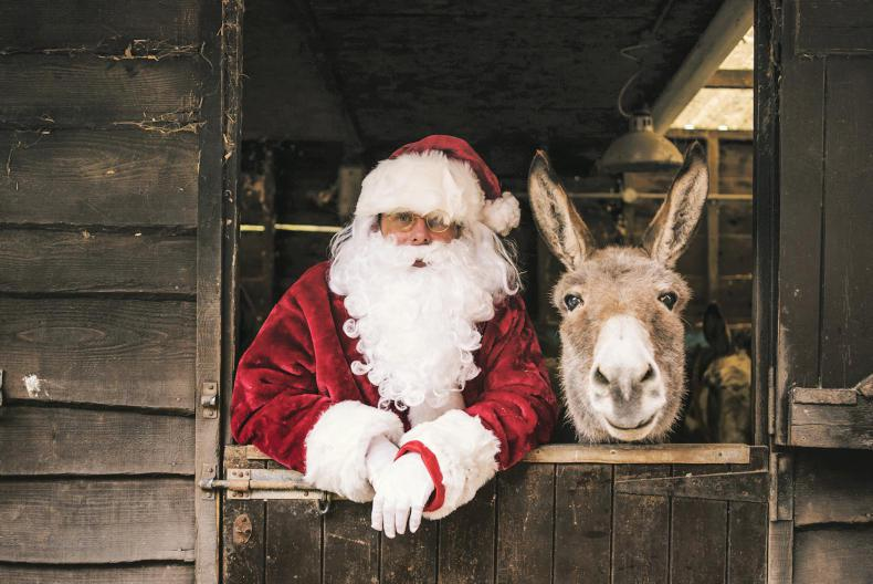 PONY TALES:  All welcome to Christmas Open Day