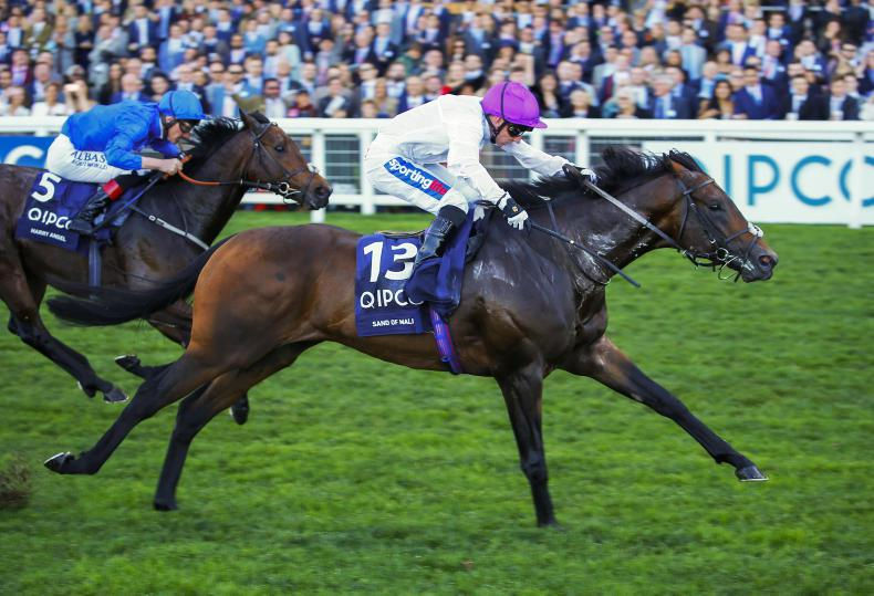 TATTERSALLS DECEMBER MARE SALE: A look at selected lots