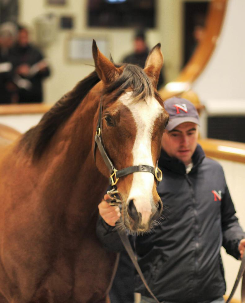 TATTERSALLS DECEMBER MARE SALE: McDonald cannot get enough of Galileo