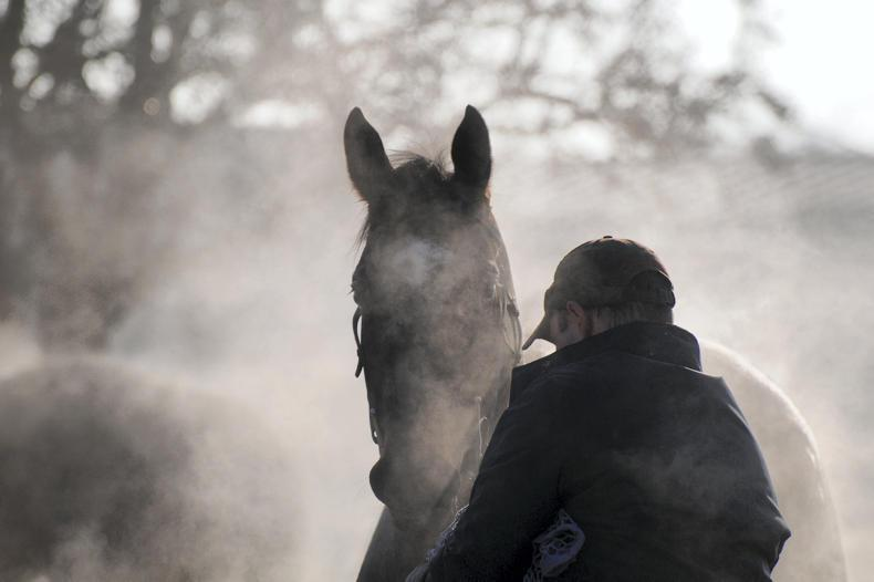 HORSE SENSE: Grooms' guide to surviving Christmas