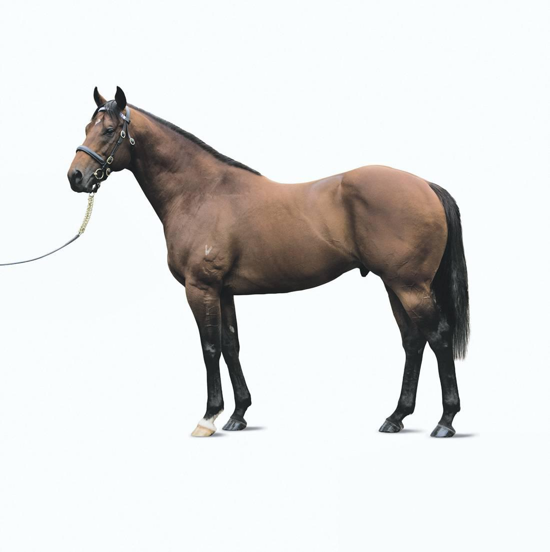 SIRE REVIEW: Excel will soon exceed the century mark