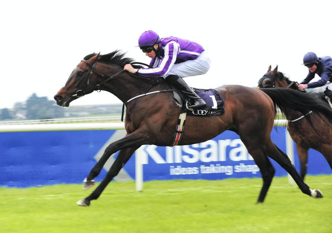 Stallion review: Camelot ready to replace Montjeu