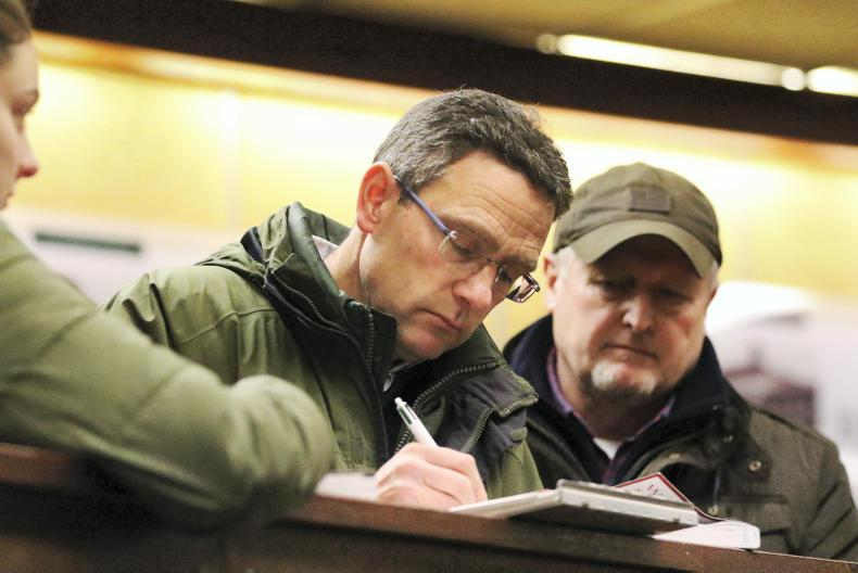 SALES: Strong demand for NH foals at Goffs