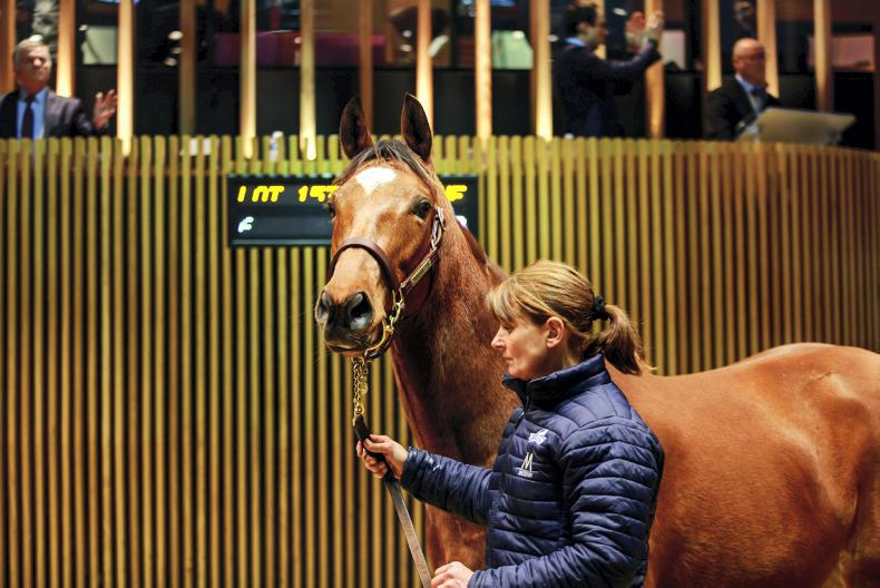 ARQANA BREEDING STOCK SALE: Records broken as Arqana ends year on a high