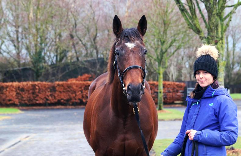NEWS: Irish bloodstock sales year ends on a high