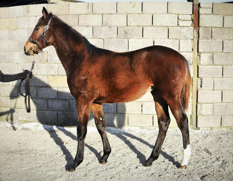 SALES: Soldier's son is top lot