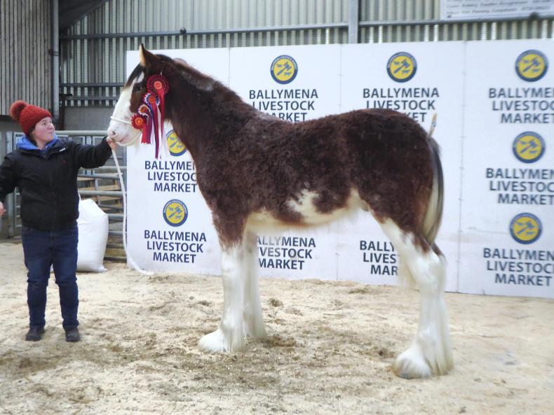 AROUND THE COUNTRY:  Tanner's Clydesdale colt stands supreme