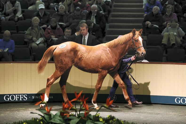 CHAMPION SALES 2014: Frankel filly makes €1.8 million at Goffs