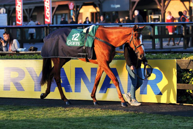 BREEDING INSIGHTS: Punchestown sale-topper looks the real business