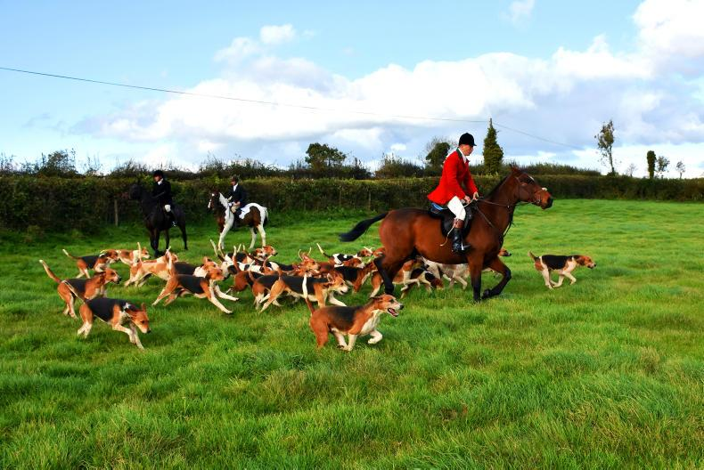 HUNTING:  Friendly pack in great horse country