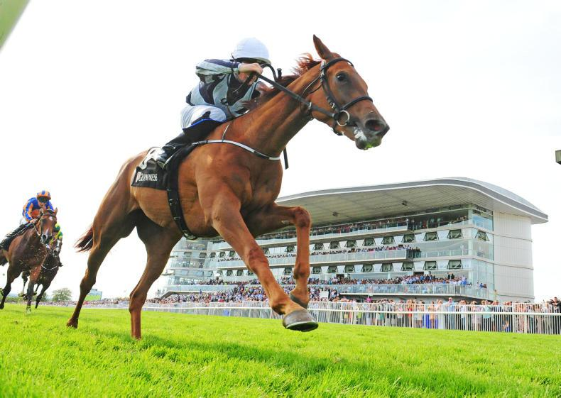 A LOOK AHEAD: Who to follow in Irish racing world for 2020?
