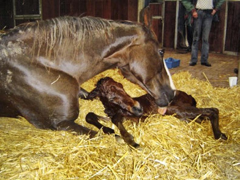 HORSE SENSE: Keep calm and foal on