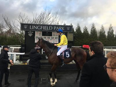 Dubai Warrior delivers for Gosden and Havlin at Lingfield
