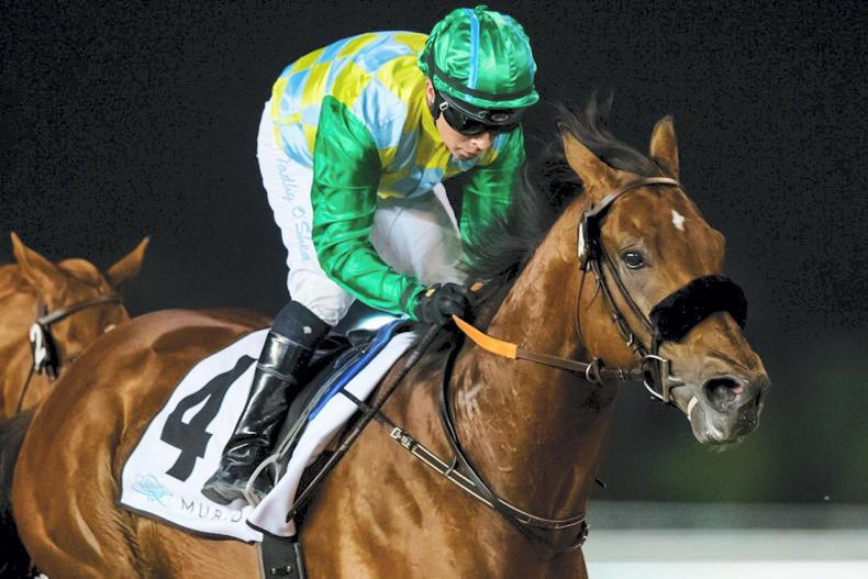 BREEDING INSIGHTS: Secret Ambition's gret end to a memorable year