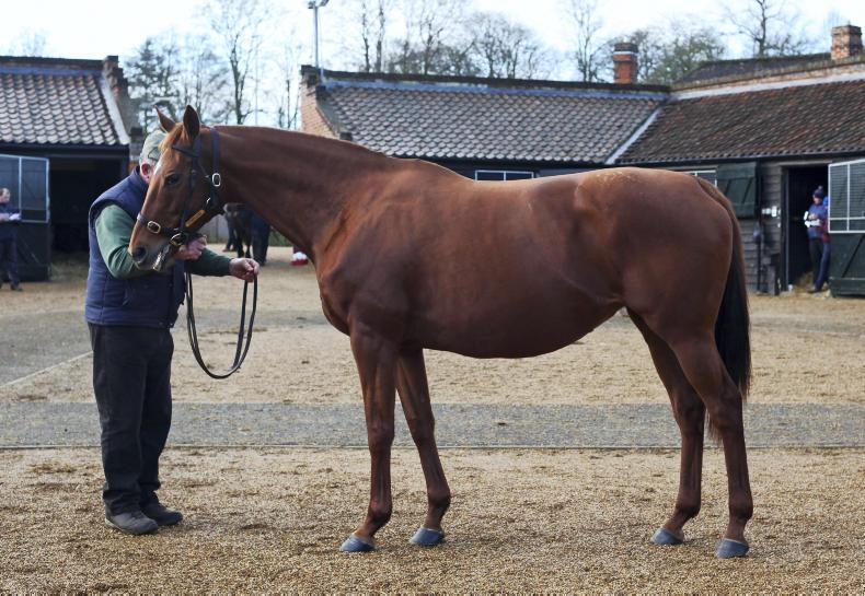 SALES REVIEW 2019 BREEDING STOCK: Record numbers of lots at 500,000gns