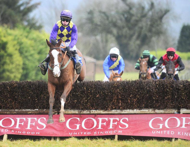 DROMAHANE MONDAY: Goff's Bertie is brilliant on his debut