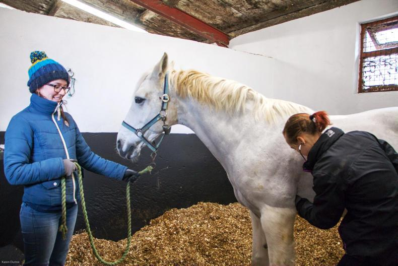 EDUCATION FEATURE 2020: Huge demand for equine veterinary nurses